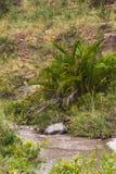 Masai Mara Landscape kenya Royaltyfri Foto