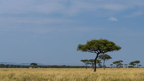 Masai Mara Landscape Royalty Free Stock Photo