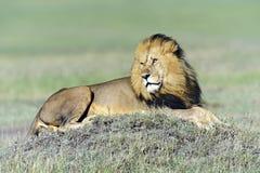 Masai Mara Royalty Free Stock Photo