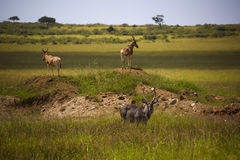 The Masai Mara national reserve in Kenya Stock Photo