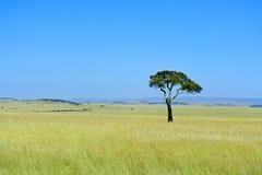 Masai Mara Park Royalty Free Stock Images