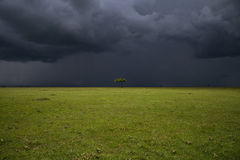 Masai Mara plain. Lonely tree with storm clouds in the background Stock Photos