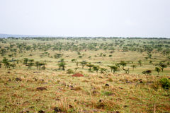 Masai mara reserve Stock Images