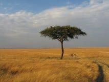 Masai Mara Scenic Landscape Arkivbilder