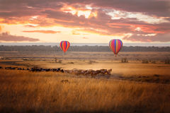 Masai Mara sunrise with wildebeest and balloons. Sunrise over the Masai Mara, with a pair of low-flying hot air balloons and a herd of wildebeest below in the Stock Images
