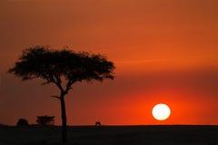 Masai mara Stock Photos