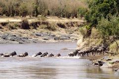 Masai Mara Wildebeast Stockfoto