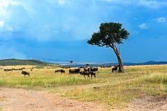 Masai Mara Wildebeest Στοκ Εικόνες