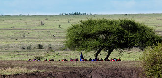 Masai men meeting. Masai men with traditional dress have a meeting under the big tree,tanzania stock photography