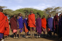 Masai performing warrior dance. Royalty Free Stock Photo