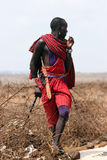 Masai portrait Stock Image