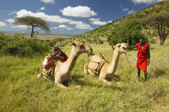 Masai in red robe and Camels and Acacia tree at Lewa Conservancy, Kenya, Africa Stock Photo