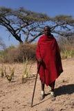 masai sheperd Obrazy Royalty Free