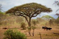 Masai Shepherd in Amboseli Stock Photography