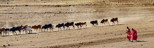 Masai shepperd Obrazy Stock