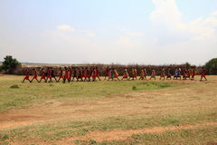 Masai som går - Kenya - Afrika Royaltyfria Foton