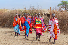 Masai tribe. AMBOSELI, KENYA - OCT 13: Group of unidentified African men from Masai tribe prepare to show a traditional Jump dance on Oct 13, 2011 in Masai Mara Stock Image