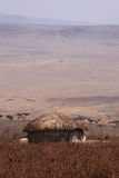 Masai village in Ngorongoro Royalty Free Stock Photo