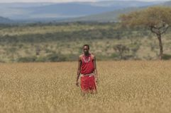 Masai Warrior man in full traditional dress with beaded necklace and belt stock photo