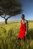 Masai Warrior in red standing near Acacia tree and surveying landscape of Lewa Conservancy, Kenya Africa Stock Images