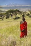 Masai Warrior in red surveying landscape of Lewa Conservancy, Kenya Africa Stock Image