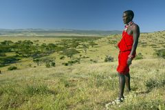 Masai Warrior in red surveying landscape of Lewa Conservancy, Kenya, Africa Stock Images