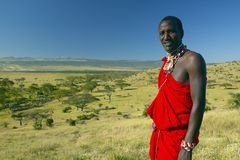 Masai Warrior in red surveying landscape of Lewa Conservancy, Kenya, Africa Royalty Free Stock Photography