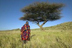 Masai Warrior in Senior Elder robe standing near Acacia Tree in Lewa Conservancy, Kenya Africa Stock Photo
