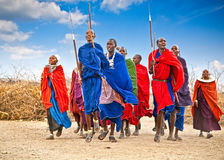 Masai warriors dancing traditional jumps. Tanzania. Royalty Free Stock Images
