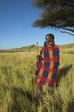 Masai wojownik stoi blisko Akacjowego drzewa w Lewa Conservancy w Starszym starsza osoba kontuszu, Kenja Afryka Zdjęcie Stock