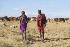 Masaihirt, der um sein Vieh nahe Nationalpark Nairobis in Kenia, Afrika sich kümmert lizenzfreie stockfotos
