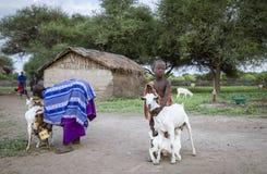 Masaijunge, der seinem motehr hilft, um die Familienziegen zu melken lizenzfreie stockbilder
