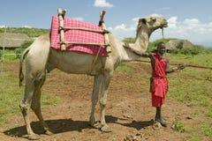 Masaikrigaren i traditionell röd toga poserar framme av hans kamel på Lewa djurlivnaturvård i norr Kenya, Afrika Arkivfoton