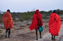 masais images stock