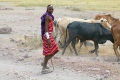 Masais bemannen und Vieh lizenzfreies stockfoto