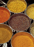 Masala box. Indian spices - Masala box containing fenugreek, curry, garam, black mustard seeds, chilli, cumin seeds stock photo