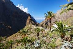 Masca, Tenerife Lizenzfreies Stockbild