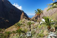 Masca, Tenerife. View of the village Masca, Tenerife, Canary Islands Royalty Free Stock Image