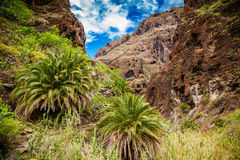 Masca valley with palm trees and cliffs Stock Images