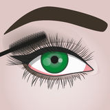 Mascara. Girl paints her eyelashes mascara Stock Photos