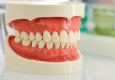 Mascella dentale fotografia stock libera da diritti