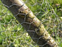 Maschendraht und Baum Stockfotos