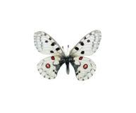 Maschera della farfalla Fotografie Stock