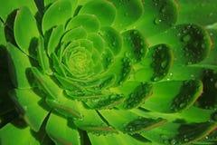 Maschera della priorità bassa del petalo verde Fotografia Stock