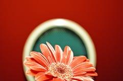 Maschera di un fiore rosso Fotografia Stock Libera da Diritti
