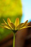 Maschera a macroistruzione di un fiore giallo Fotografia Stock
