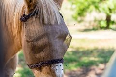 Maschera protettiva del cavallo contro le mosche immagini stock