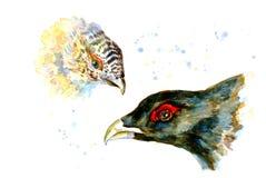 Maschio capo dell'acquerello e gallo cedrone femminile Immagine Stock Libera da Diritti