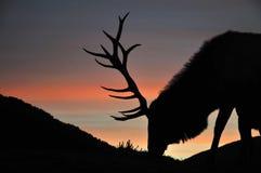 Maschio di tramonto Fotografie Stock