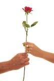 Maschio e stretta femminile una singola Rosa rossa di devozione Immagini Stock Libere da Diritti